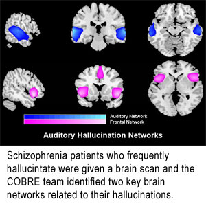Text Box:    Schizophrenia patients who frequently hallucinate were given a brain scan and we identified two key brain networks related to their hallucinations.
